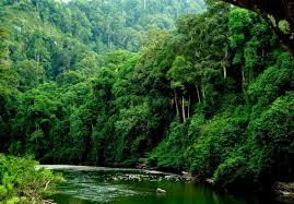 Borneo 3