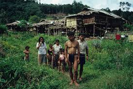 Borneo 7